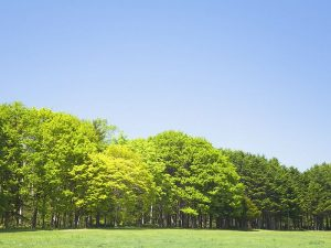 Trees_in_Green_field_and_blue_sky_JA122_photo - Trees in Green field and blue sky JA122 photo 300x225